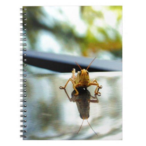 grasshopper stand off notebooks