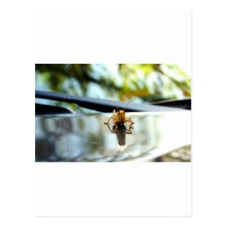 grasshopper stand off postcard