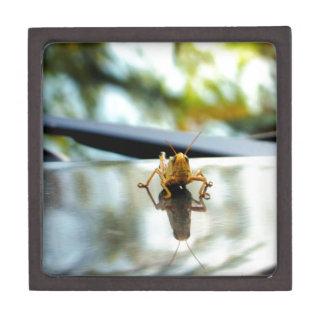 grasshopper stand off premium trinket boxes