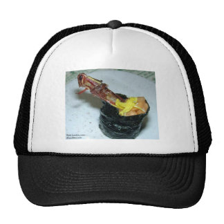 Grasshopper Sushi Tees Mugs Other Gifts Hats
