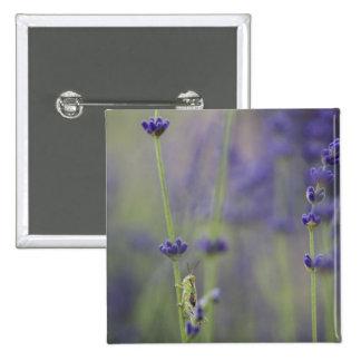 Grasshopper with lavender 2 inch square button