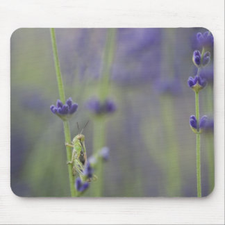 Grasshopper with lavender mouse pad
