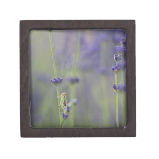 Grasshopper with lavender premium gift boxes