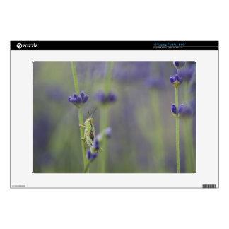 "Grasshopper with lavender skins for 15"" laptops"