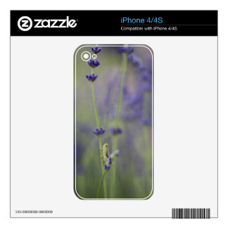 Grasshopper with lavender skins for the iPhone 4S