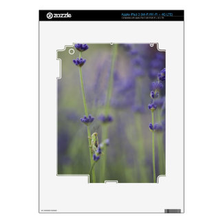 Grasshopper with lavender iPad 3 skins