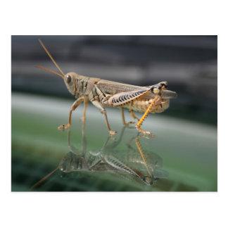 Grasshopperly Reflections Postcard