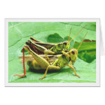 Grasshoppers on Zucchini Stationery Note Card