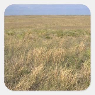 Grassland prairie east of Sidney, Nebraska. Square Sticker
