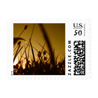 Grassy Field Backlit by the Sunrise Postage