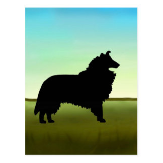 Grassy Field Collie Dog Postcard