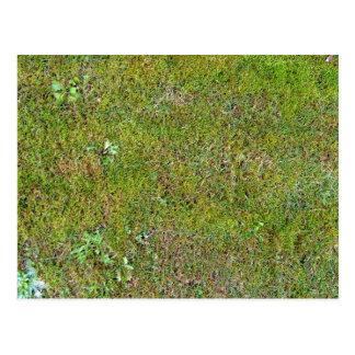 Grassy Ground Background Texture Postcard