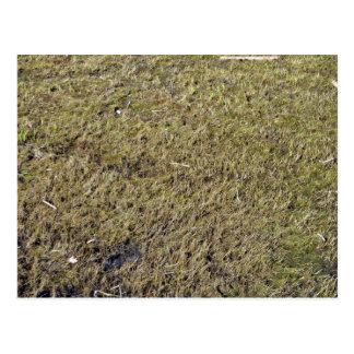 Grassy Ground Texture Postcard