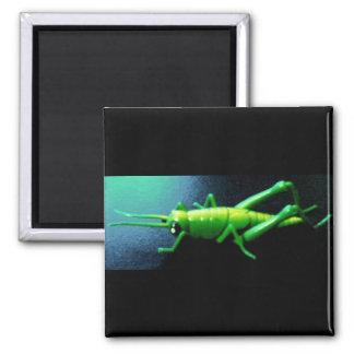 Grassy hopper 2 inch square magnet