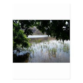 Grassy Lake with Tree Branch Postcard