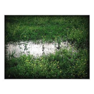 Grassy Puddle Photo Print
