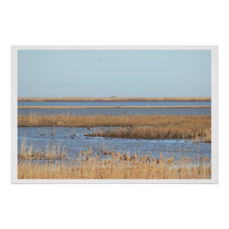 Grassy Waterscape Poster