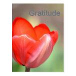 Gratitud floral del tulipán rojo postales