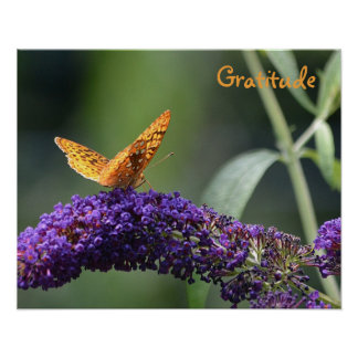 Gratitude Butterfly Poster