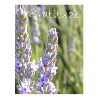 Gratitude Post Card