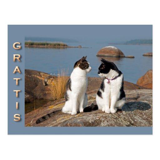 Grattiskort för katter CC0552 Postcard
