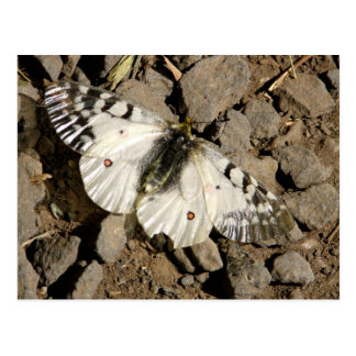 Grava de la mariposa tarjetas postales