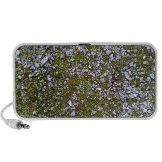 Grava y hierba laptop altavoces