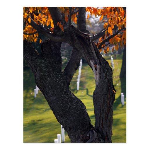 Graves through the Trees Postcard