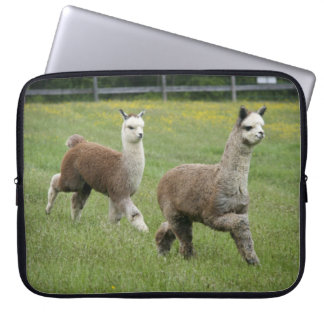 Gray Alpacas Running Computer Sleeve
