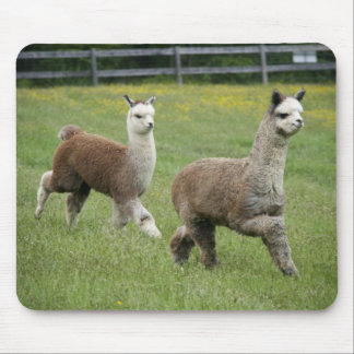Gray Alpacas Running Mouse Pad