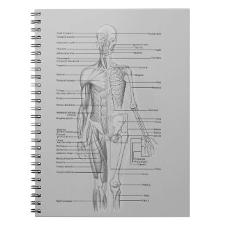 Gray Anatomy Spiral Notebook