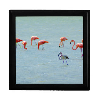 Gray and pink flamingos flock in lake keepsake box
