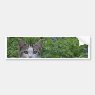 Gray and white cat in field of blue bonnets bumper sticker
