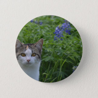Gray and white cat in field of blue bonnets pinback button