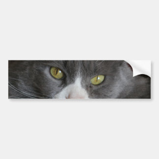 GRAY AND WHITE CAT KATIE BUMPER STICKER
