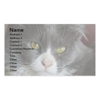 GRAY AND WHITE CAT KATIE BUSINESS CARD