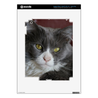 GRAY AND WHITE CAT KATIE iPad 3 SKINS