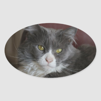 GRAY AND WHITE CAT KATIE STICKERS