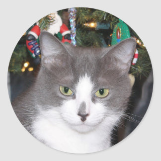 Gray and white Christmas kitty Classic Round Sticker