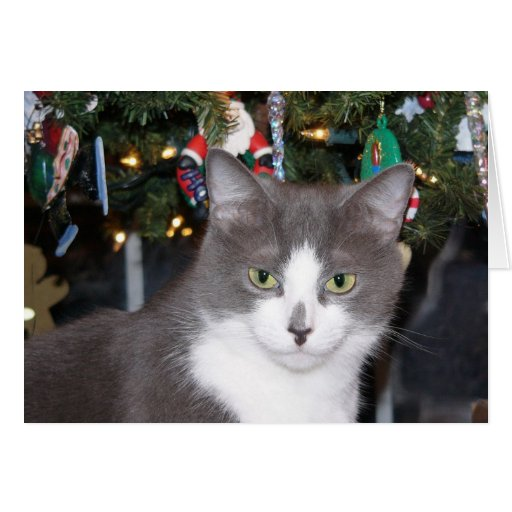 Gray and white kitty Christmas Card