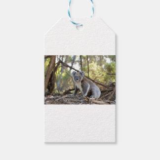 Gray and White Koala Bear Gift Tags