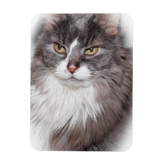 GRAY AND WHITE LONGHAIRED CAT MAGNET