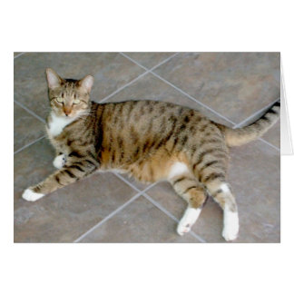 Gray and White Tabby Cat Greeting Card