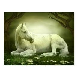 Gray Arabian Horse Postcard