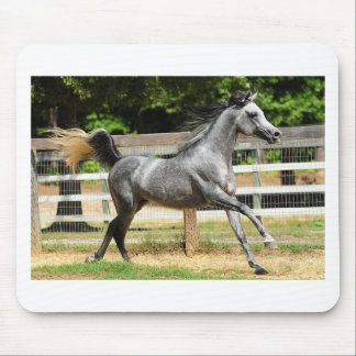 Gray Arabian Stallion Mouse Pad