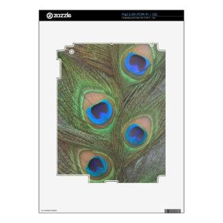 Gray Background Peacock Feathers Skin For iPad 2