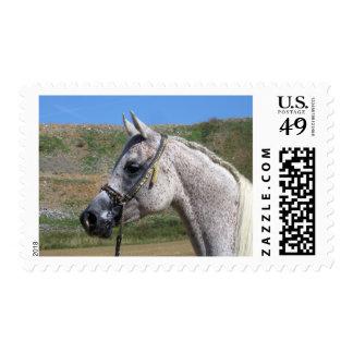 Gray Beduoin Arabian Mare Postage Stamp