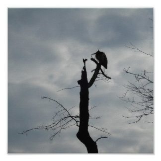 Gray Bird Silhouette Poster