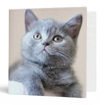 Gray British Shorthair Cat Binder