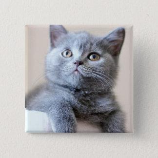 Gray British Shorthair Cat Pinback Button